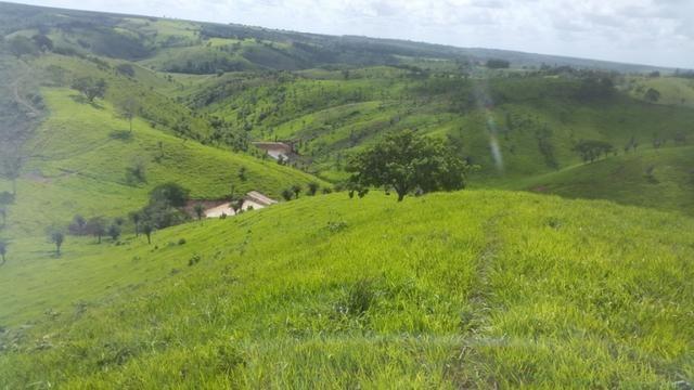 Fazenda ( Vendo ou Troco ) Propriedade Em Teotônio Vilela-AL - Foto 18