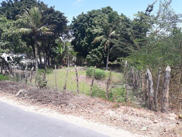 Terreno em barreirinhas - Foto 4