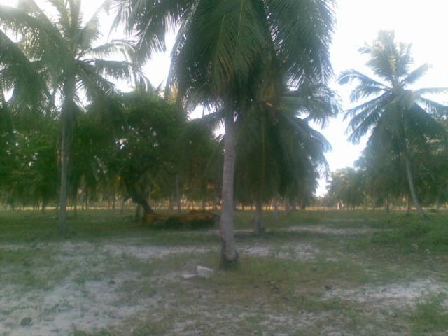 Fazenda 500ha - Foto 10