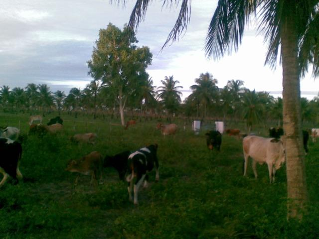 Fazenda 500ha - Foto 15