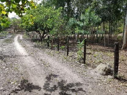 Fazenda de 247 ha, distante 37 km de Teresina