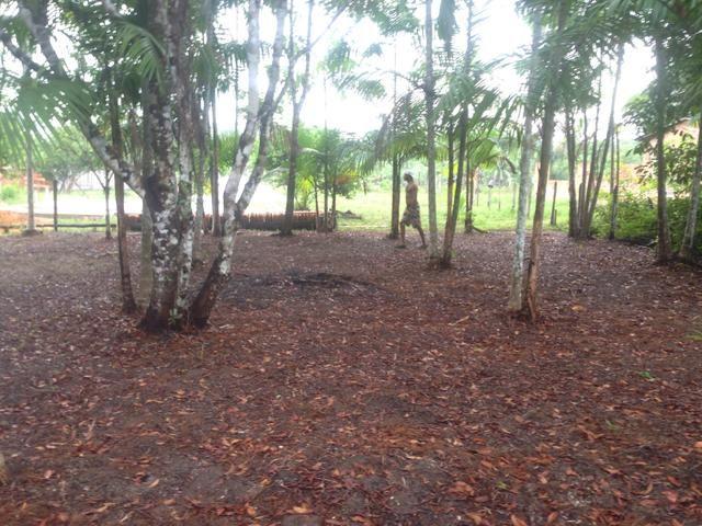 Terreno com plantação de açaí - Foto 4