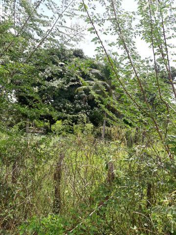 Terreno em barreirinhas - Foto 6
