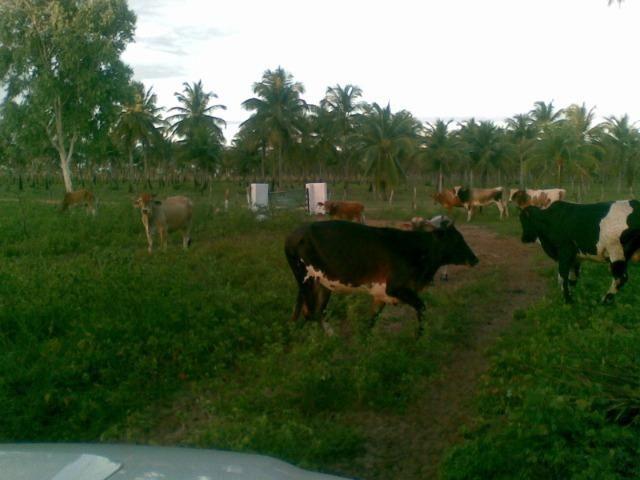 Fazenda 500ha - Foto 16