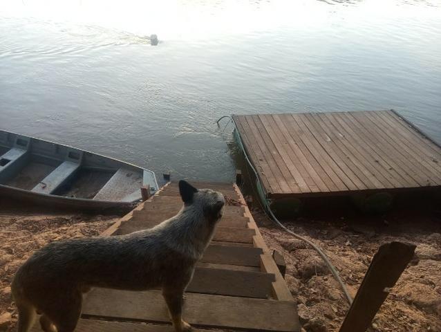Pesqueiro no pantanal estudo troca - Foto 13