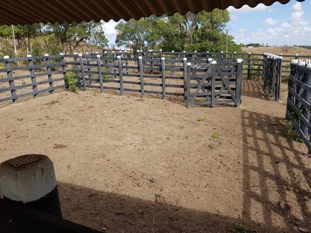 Fazenda ( Vendo ou Troco ) Propriedade Em Teotônio Vilela-AL - Foto 16