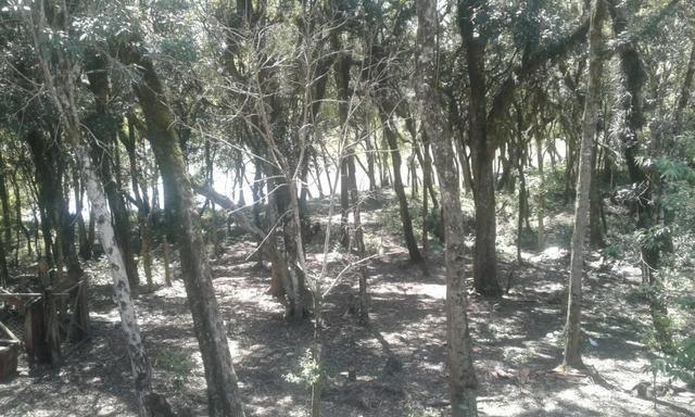 Vende-se chácara em Salso - Quitandinha (cód. A351) - Foto 11