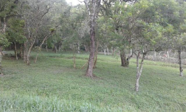 Vende-se chácara em Anta Magra - Quitandinha (cód. A354) - Foto 13