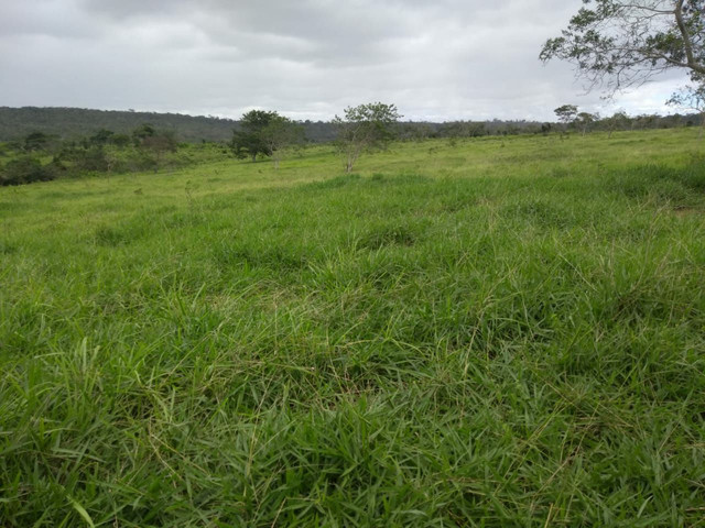 FAZENDA  em tapiramuta  - Foto 3