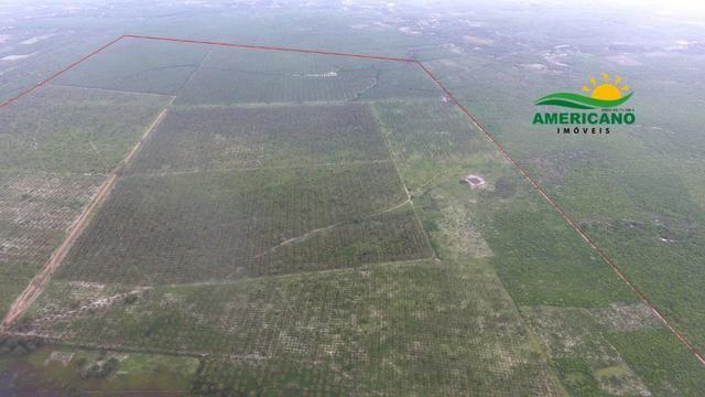 Fazenda 500ha - Foto 4