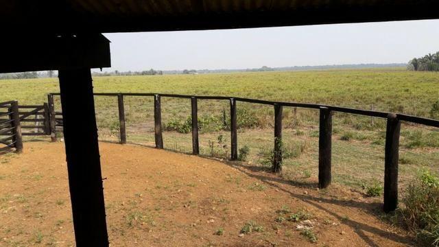 Vendo Linda Fazenda de frente a estrada - a 30 km de porto velho/Ro - Foto 19