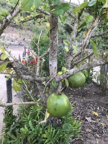 Fazenda em Minas - Foto 11