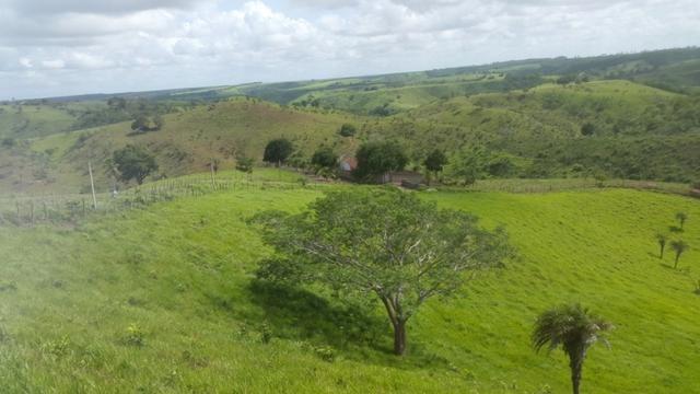 Fazenda ( Vendo ou Troco ) Propriedade Em Teotônio Vilela-AL - Foto 17