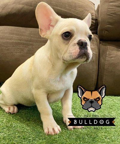 Bulldog francês macho creme - Foto 3