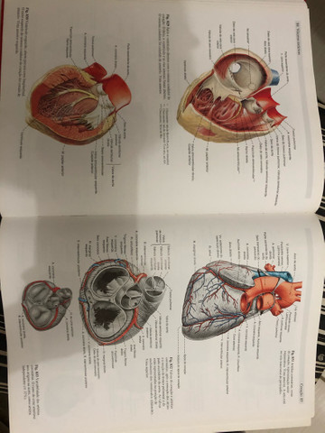 Sobotta Vol 2- Anatomia Humana - Foto 2