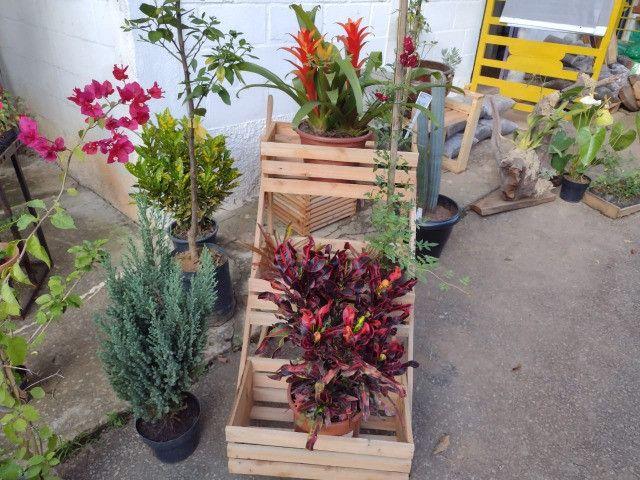 Suporte pra planta com roda (Carrinho para plantas) - Foto 4
