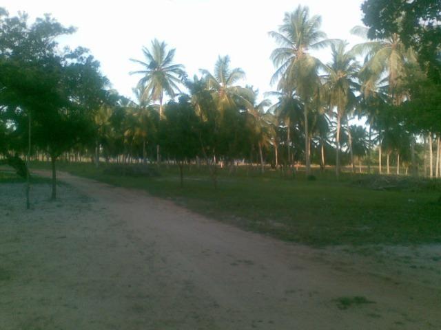 Fazenda 500ha - Foto 9