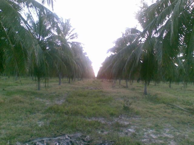 Fazenda 500ha - Foto 20