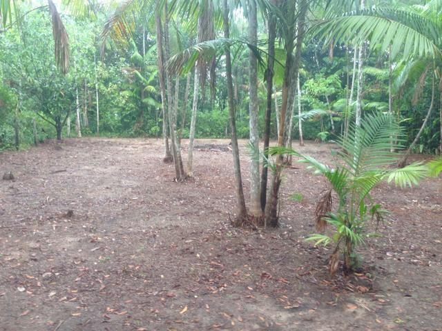 Terreno com plantação de açaí - Foto 3