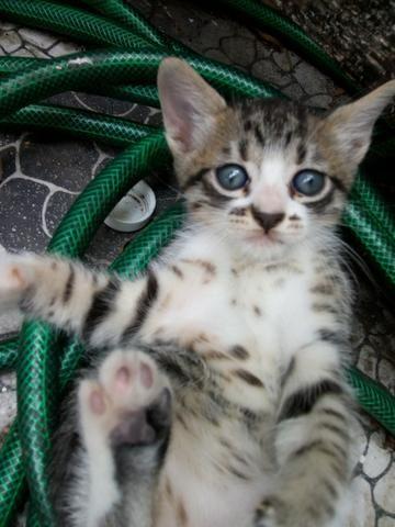 Filhotes fofos de gatos - Foto 3
