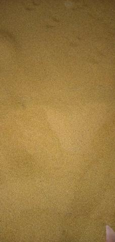 Semente de alfafa - Foto 2