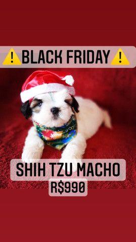 Black Friday!+belo Shih Tzu macho R$990 - Foto 2