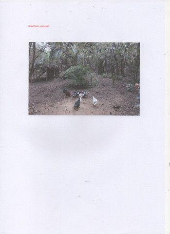 Chácara com 11000 mts 2 - Foto 11