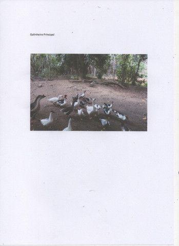 Chácara com 11000 mts 2 - Foto 4