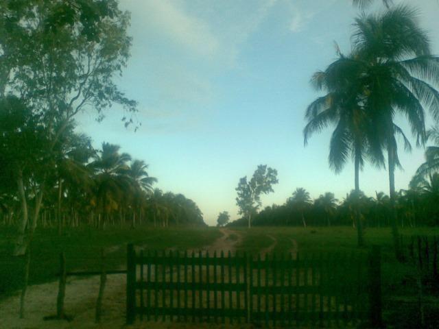 Fazenda 500ha - Foto 11