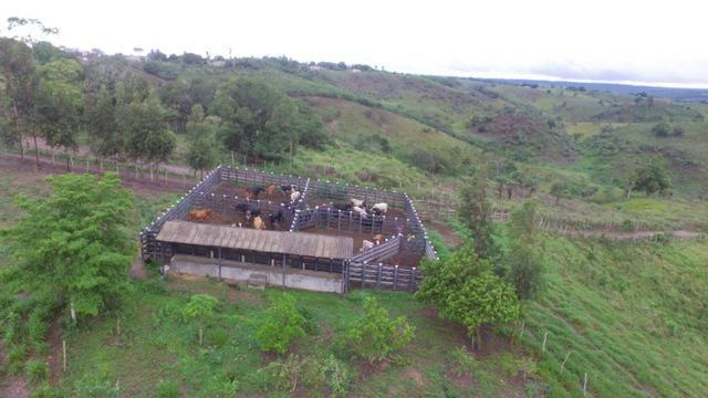 Fazenda ( Vendo ou Troco ) Propriedade Em Teotônio Vilela-AL - Foto 7