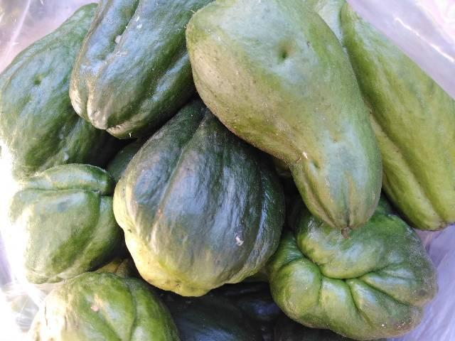 Legumes - Foto 3