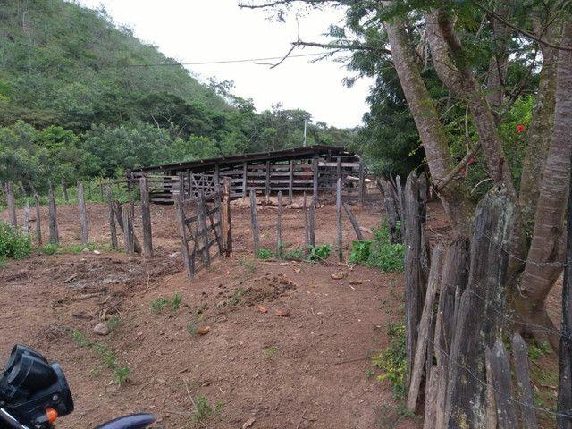 FAZENDA  em tapiramuta  - Foto 4