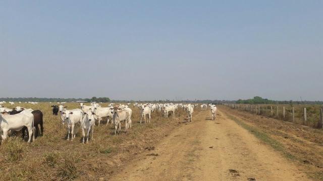 Vendo Linda Fazenda de frente a estrada - a 30 km de porto velho/Ro - Foto 5