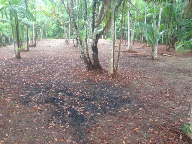 Terreno com plantação de açaí - Foto 5