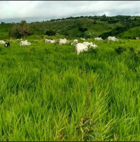 Fazenda ( Vendo ou Troco ) Propriedade Em Teotônio Vilela-AL - Foto 8