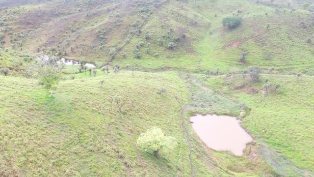 Fazenda ( Vendo ou Troco ) Propriedade Em Teotônio Vilela-AL - Foto 5