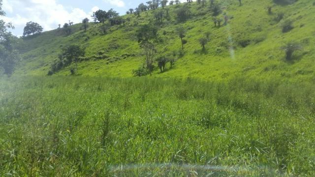 Fazenda ( Vendo ou Troco ) Propriedade Em Teotônio Vilela-AL - Foto 12