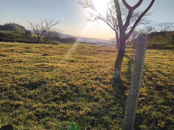8271 | Fazenda à venda em ZONA RURAL, Cascavel