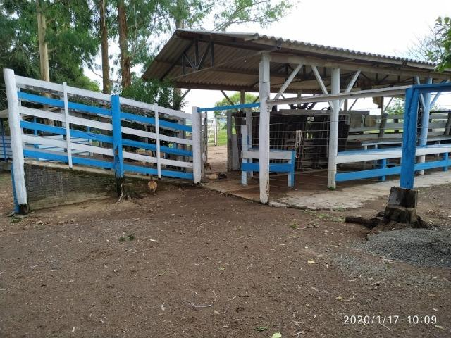 Fazenda - Foto 10