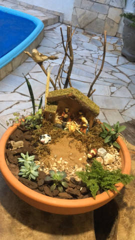 Plantas, Terrarios e Mini Jardins