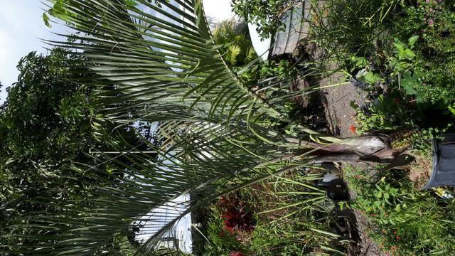 Plantas e grama - Foto 6