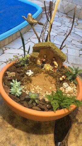 Plantas, Terrarios e Mini Jardins - Foto 2