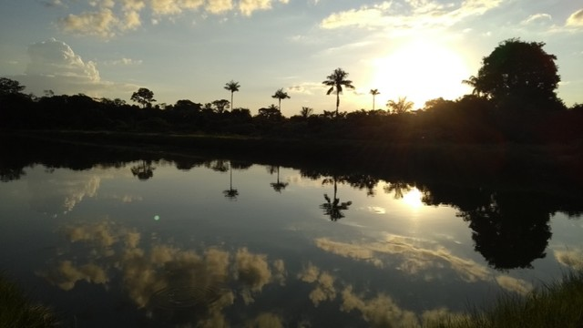 Fazenda em Porto Velho - Foto 9