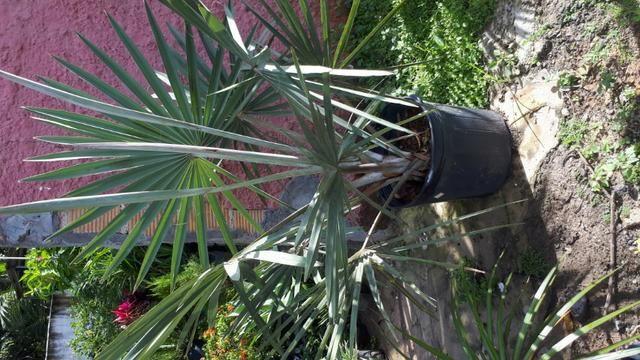 Plantas e grama - Foto 2