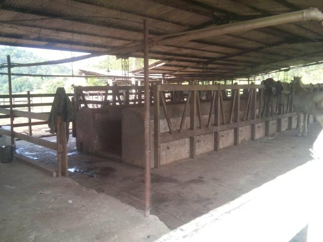 Linda fazenda em Cachoeiras de Macacu 20 alqueires oportunidade!!!! - Foto 11