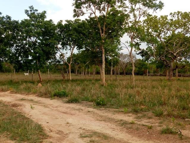 Vende-se uma chácara em Poconé, 50 hectares - Foto 5