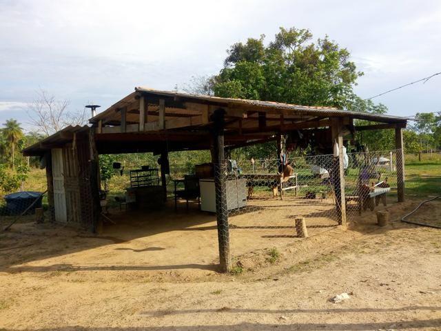 Vende-se uma chácara em Poconé, 50 hectares - Foto 9