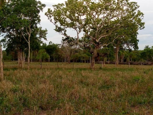 Vende-se uma chácara em Poconé, 50 hectares - Foto 10