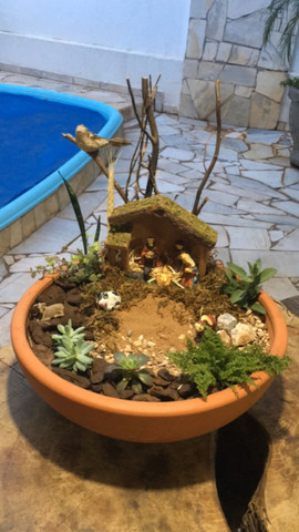 Plantas, Terrarios e Mini Jardins - Foto 4