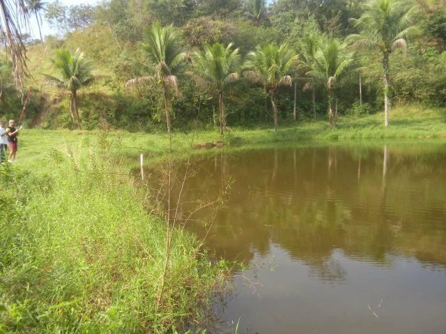 Linda fazenda em Cachoeiras de Macacu 20 alqueires oportunidade!!!! - Foto 6